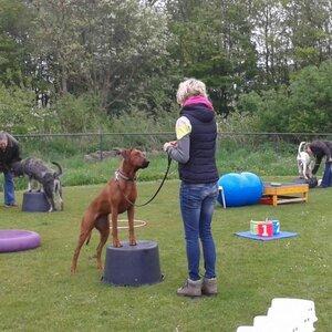 Fun4dogz Hondentraining en Hondenmassage image 1