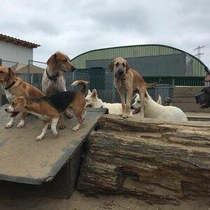 De Hondenkapper image 2