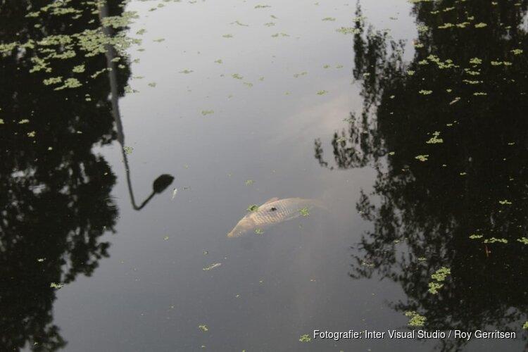 Vissen komen boven drijven in Amstelveense sloot
