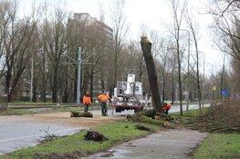 Boom dreigt om te vallen bij Beneluxbaan en trambaan